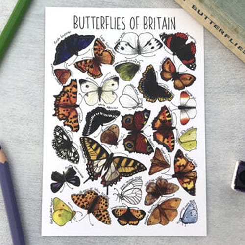 Butterflies Design of Alexia Claire Postcards Pack