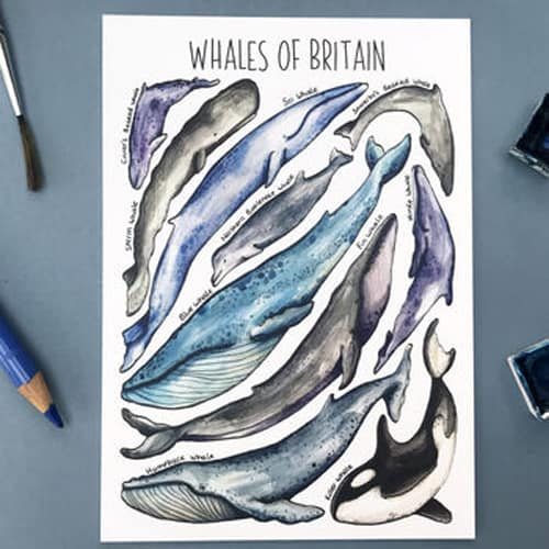 Whales Design of Alexia Claire Postcards Pack
